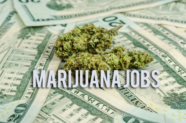 Cannabis Careers: Awesome jobs in the cannabis industry