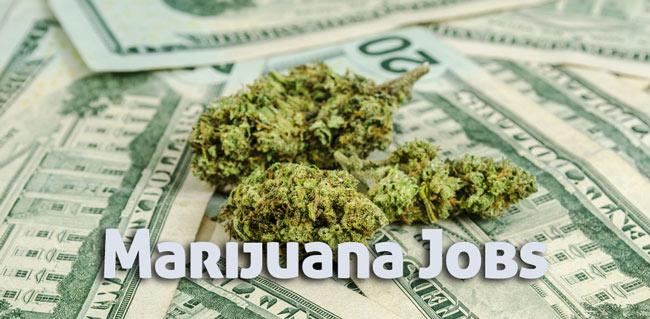 Medical Marijuana Jobs: Earn as an ambassador as a 420 jobs!