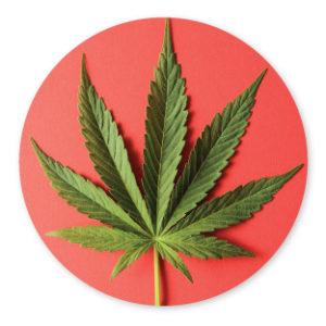 Cannabis Dispensary Santa Cruz CA: Plus get a Doctor's Rec