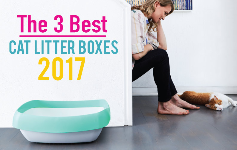 The 3 Best Cat Litter Boxes of 2017